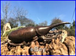 Antique Japanese Bronze Okimono of a Giant Rhinoceros Beetle Meiji period signed